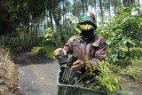 Petani penggarap lahan milik Perhutani menurunkan bibit pohon sebelum ditanam di kawasan hutan produksi Petak 98, Desa Jampit, Ijen, Bondowoso, Jawa Timur, Kamis (25/2/2021). Perhutani Kesatuan Pemangkuan Hutan (KPH) Bondowoso dan petani menanam 8 ribu bibit pohon, seperti Makadamia, Suren, Sengon, Sirsat, Apokat dan Nangka untuk mencegah terjadinya longsor dan banjir di kawasan Ijen. Antara Jatim/Seno/zk.