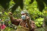 Andaliman, rempah eksotik Tanah Batak yang makin terkenal
