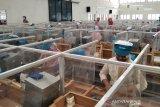 Masa pandemi, pabrik rokok di Keresidenan Pati bertambah