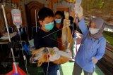 Dokter hewan melakukan perawatan terhadap anjing saat sterilisasi dalam rangkaian memperingati HUT ke-233 Kota Denpasar di Dinas Pertanian Kota Denpasar, Bali, Kamis (25/2/2021). Pelayanan vaksinasi, sterilisasi dan kastrasi secara gratis tersebut diprioritaskan bagi anjing Bali untuk mempertahankan status daerah terbebas dari penyakit rabies serta mencegah penularan rabies pada masa pandemi COVID-19. ANTARA FOTO/Nyoman Hendra Wibowo/nym.