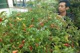 Warga Palangka Raya didorong produktif dengan manfaatkan lahan kosong