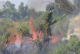 91 titik api ditemukan di enam kabupaten/ kota di Riau