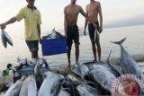 Sikka siapkan belasan UKMK olah ikan masuk pasar lokal