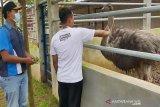 Ada kebun binatang mini di Temanggung, apa saja koleksinya?