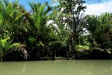 Wagub Papua minta bupati tak beri izin pembangunan di lahan sagu