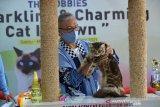Juri melakukan penilaian terhadap jenis kucing Maine Coon saat berlangsung kontes kucing apada kegiatan The Hobbies Sparkling and Charming Cat in Town di Banda Aceh, Minggu (28/2/2021). Kegiatan kontes kucing yang diikuti sejumlah peserta cat show kelas domestik dan cat show kelas ras murni (all breed) itu bertujuan mewujudkan kota Banda Aceh sebagai kota gemilang yang  ramah kucing dan peduli terhadap kesehatan hewan peliharaan lainnya. ANTARA FOTO/Ampelsa.