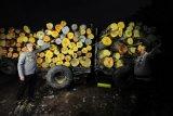 Petugas kepolisian menunjukkan barang bukti tangkapan kayu ilegal di Mapolsek Kota Baru, Jambi, Jumat (26/2/2021) malam. Aparat kepolisian setempat menetapkan tiga tersangka dan mengamankan lima truk beserta 38 kubik kayu rimba campuran tanpa dokumen yang diduga berasal dari kawasan hutan lindung di wilayah Berbak, Tanjungjabung Timur. ANTARA FOTO/Wahdi Septiawan/hp.