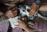 Seekor yang ditelantarkan atau dibuang oleh pemiliknya mendapatkan perawatan di rumah Ana Yuliana dan Mariyah, Desa Sukamanah, Kota Tasikmalaya, Jawa Barat, Senin (1/3/2021). Mereka merawat puluhan ekor kucing berpenyakit yang ditemukan di jalan hingga sembuh meski harus menghabiskan biaya Rp1 juta per bulan. ANTARA JABAR/Adeng Bustomi/agr.