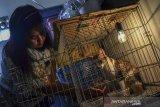 Seekor yang ditelantarkan atau dibuang oleh pemiliknya mendapatkan perawatan di rumah Ana Yuliana dan Mariyah, Desa Sukamanah, Kota Tasikmalaya, Jawa Barat, Senin (1/3/2021). Pasangan suami istri tersebut merawat puluhan ekor kucing berpenyakit yang ditemukan di jalan hingga sembuh meski harus menghabiskan biaya Rp1 juta per bulan. ANTARA JABAR/Adeng Bustomi/agr.