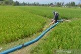 Petani mendistribusikan air sungai ke lahan sawah di desa Keumere, Kecamatan Kuta Cut Glie, Kabupaten Aceh Besar, Aceh, Selasa (2/3/2021). Untuk mengatasi ancaman kekeringan dan gagal panen tanaman padi, kelompok tani di daerah itu  mendistribusikan air sungai ke lahan sawah menggunakan  pipa sepanjang satu kilometer. ANTARA FOTO/Ampelsa.