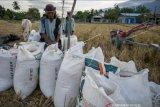 Produksi padi di Sulteng selama 2020 alami penurunan akibat banjir