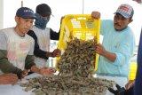 Menteri: KKP fokus kepada komoditas ekspor  bernilai tinggi