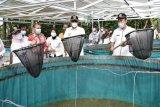 Bupati Sleman: Sistem bioflok signifikan meningkatkan produksi ikan
