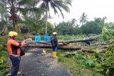 Sleman dilanda angin kencang puluhan pohon dan rumah rusak