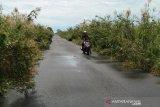 Jalan menuju pelabuhan Teluk Segintung banyak ditumbuhi tanaman liar