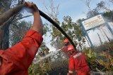 Chevron bantah hutan lindung perusahaan  di Riau terbakar