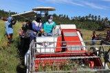 Pemkab Buol bertekad tingkatkan produksi pangan