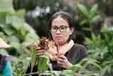Aktivis: Perempuan harus dijamin kemerdekaannya pada sektor agraria