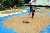 Petani menjemur gabah di Desa Buddagan, Pamekasan, Jawa Timur, Minggu (7/3/2021). Pemerintah menaikkan  anggaran ketahanan pangan pada tahun 2021 menjadi Rp104 trilun dari anggaran tahun lalu yang mencapai sekitar Rp80 triliun, guna mendukung pemulihan ekonomi. Antara Jatim/Saiful Bahri/zk