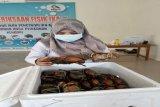 Sulawesi Tenggara ekspor kepiting bakau ke Singapura
