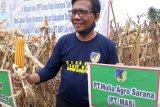 PT MAS dukung pencanangan Donggala menjadi pusat benih jagung