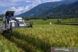 Di musim panen 2021, Sulteng target produksi padi