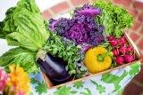 Ini yang terjadi pada tubuh saat kurang asupan sayur