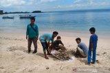 Sampah berserakan di Pantai Pink Lombok Timur dibersihkan