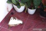 Polisi tangkap pelempar kepala anjing di rumah pejabat Kejati Riau