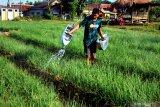 Bank Mandiri beri akses permodalan bagi petani