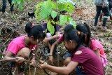 Pegiat lingkungan lestarikan tumbuhan di Kalteng melalui taman biodiversitas