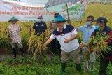 ACT beli gabah petani Blora dengan harga di  atas pasaran