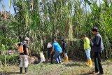 BKSDA: Konflik manusia dengan satwa  liar enam kali terjadi di Agam