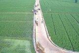 Pokdarwis GerebeQ Ayem Desa Mataram Baru buat wisata sawah