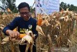 Pengembangan petani produsen benih tanaman di Donggala