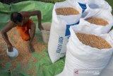 Petani sambut kenaikan harga jagung
