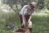 Omzet budi daya lebah madu tanpa sengat di Languang capai Rp8 juta perbulan