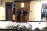 Tim Puma Polres Dompu ungkap tiga otak pencurian hewan ternak