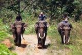 Patroli Konflik Gajah