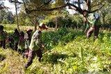 Pramuka SMKN 1 Mendo Barat, Kabupaten Bangka saat mengunjungi peninggalan Sejarah Prasasti Kota Kapur di Desa Kota Kapur Kabupaten Bangka pada Minggu (14/3). Disela-sela kunjungan tersebut mereka membersihkan area peninggalan sejarah tersebut agar selalu bersih dan terawat demi menjaga kelestarian cagar budaya di Kepulauan Babel. (babel.antaranews.com/Syahrul)