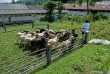 Warga tiga negara Singapura-Malaysia-Brunai berkurban 2.000 domba untuk Sumut