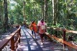 Wisata Alam Pengamatan Burung Di Sorong
