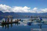 Lima ton ikan di Danau Maninjau mati akibat  angin kencang