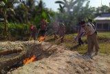Balai Karantina Lampung musnahkan 350 kilogram daging celeng