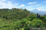 Pemkab Kulon Progo membenahi jalan menuju Borobudur Highland Samigaluh