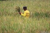 Kementan berupaya menjaga produksi dan kesejahteraan petani