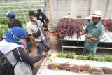 Legislator Senayan minta anggaran bimtek pertanian dioptimalkan