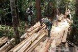 Anggota Satgas Pamtas Kapuas amankan kayu olahan ilegal di perbatasan