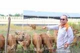 Bupati Buol: OPD gunakan pangan lokal untuk jaga stabilitas ekonomi