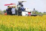 Gubernur : Jatim tidak perlu beras impor